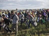 בקרוב בישראל? (המוני פליטים ערבים בדרכם מהונגריה לכיוון גרמניה)
